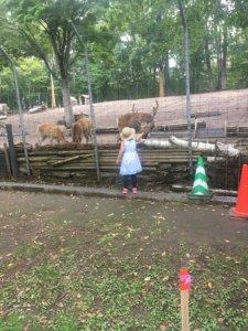 鹿に餌をやす 娘